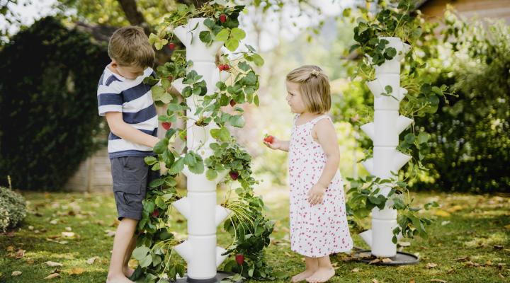 Erfinder des ersten Erdbeerbaumes im Interview